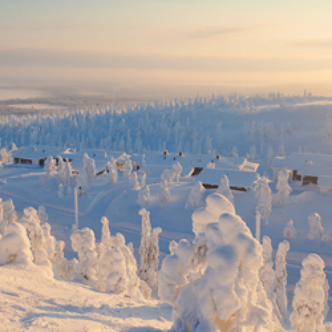 Nyfalden sne i landskabet