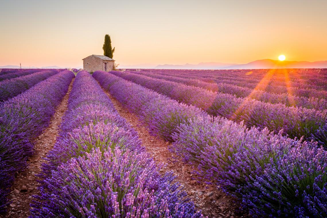 Frankreich Lavendel