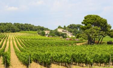 Vinmarker i Languedoc-Roussillon
