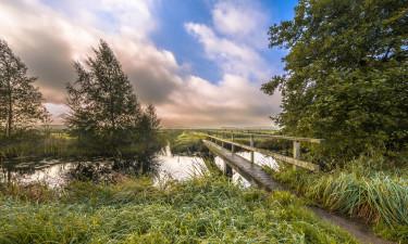 Drenthe i Holland - Natur