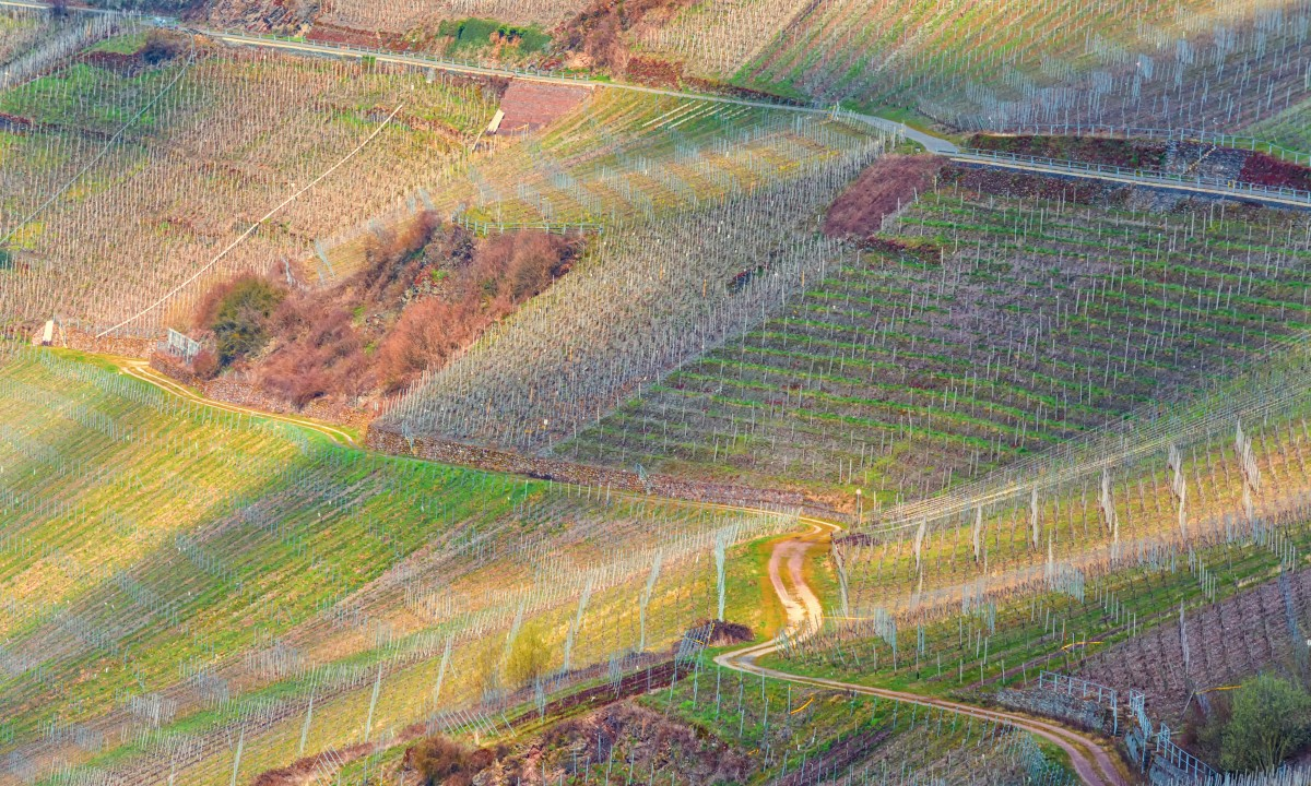 Vinmarker i Istrien, Kroatien