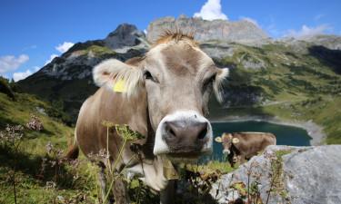 Luxus camping Schweiz