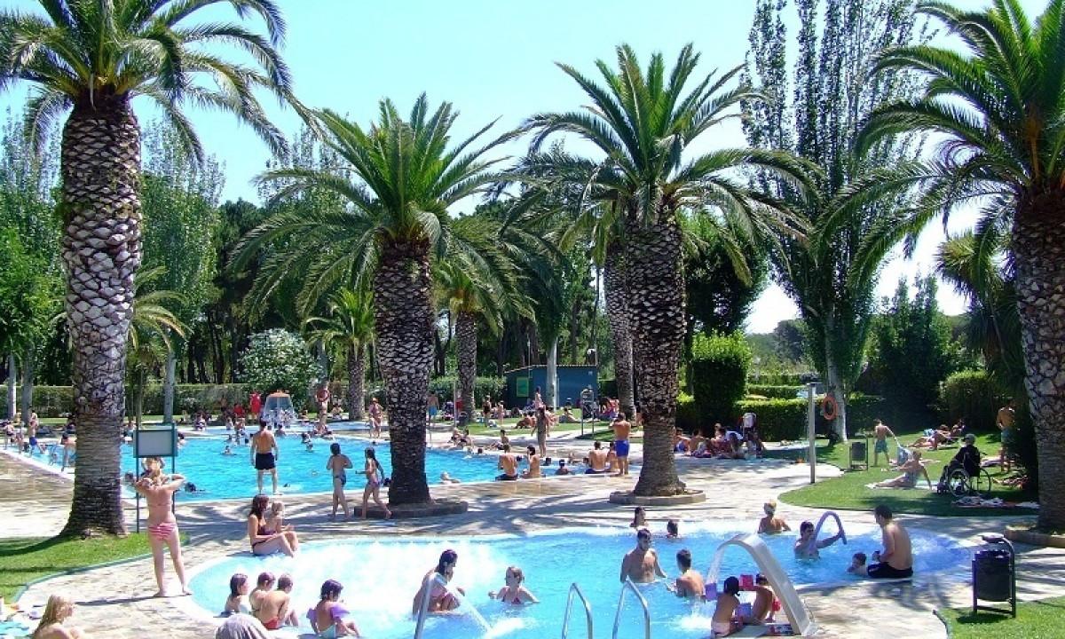 Skyggende palmer i poolområdet