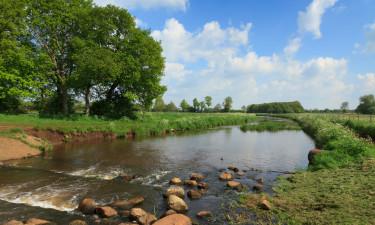 Hollandsk natur