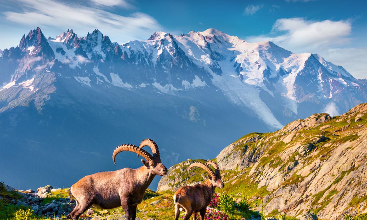 De smukke bjergtinder