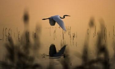 Flotte naturoplevelser