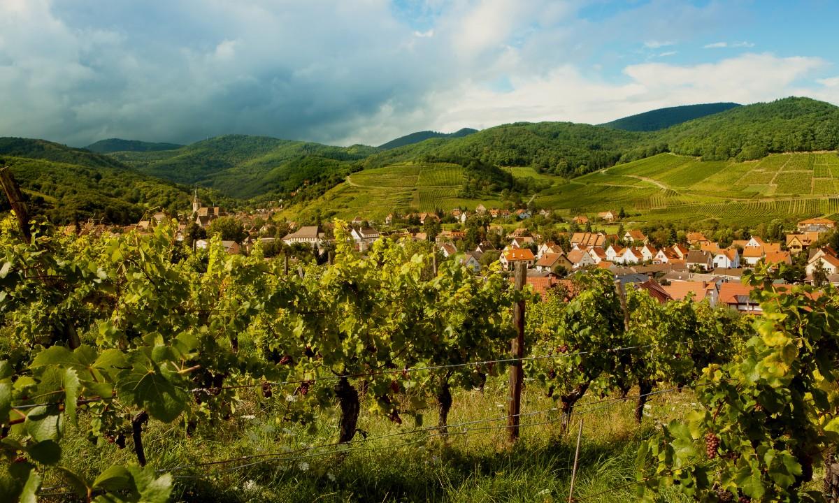 Le Clos d'Eguisheim i Alsace - Vinmarker i naerheden