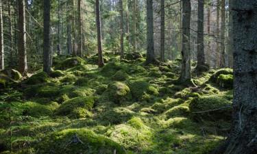 Sverige har fantastisk natur
