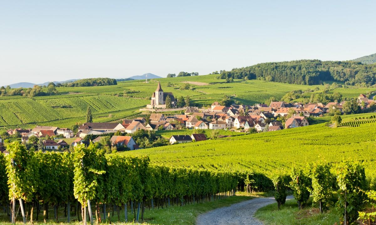 Vinmarker - Det franske landskab