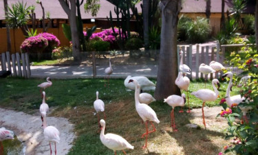 Flamingoer ved Mediterraneo Real