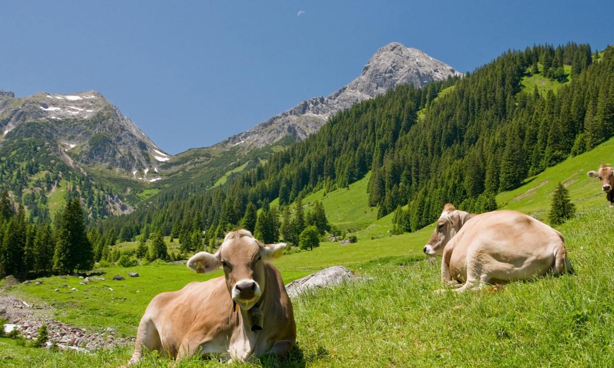 Bakkelandskab ved Alperne - badeland i skøn natur