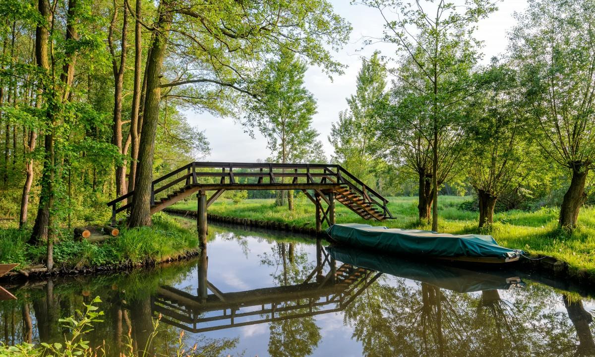 Spreewald i Brandenburg - Frodig skov
