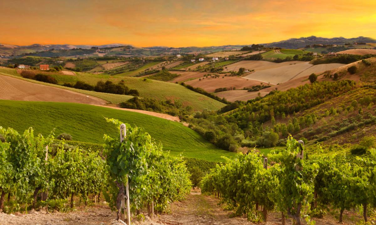 Vinmarker i Sydvestfrankrig