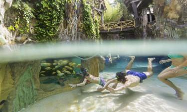 Gæster der dykker i badeland