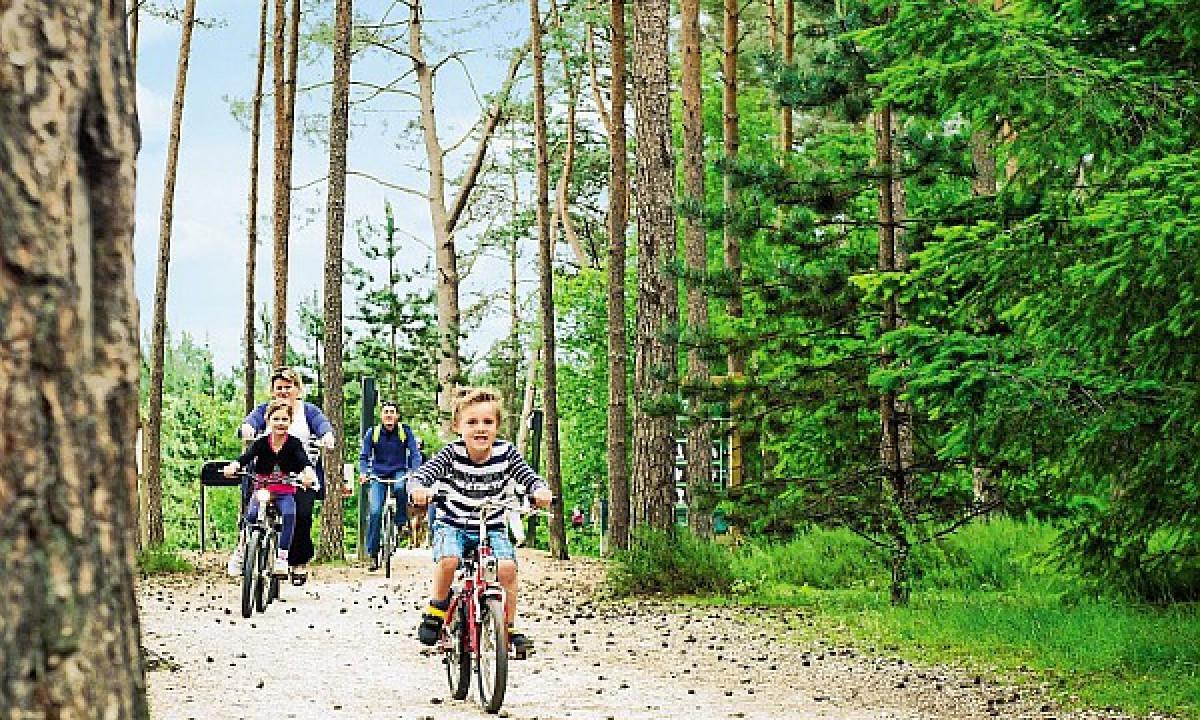 Les Hauts de Bruyères - Cykeltur i skoven