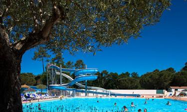 Stor swimmingpool med vandrutsjebaner