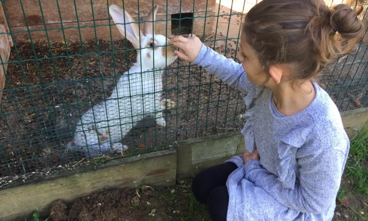 Pige med kanin i mini-farm