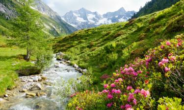 Flot natur i Tyrol