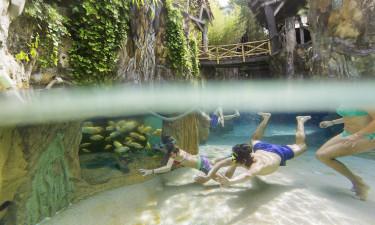 Gaester der dykker i badeland