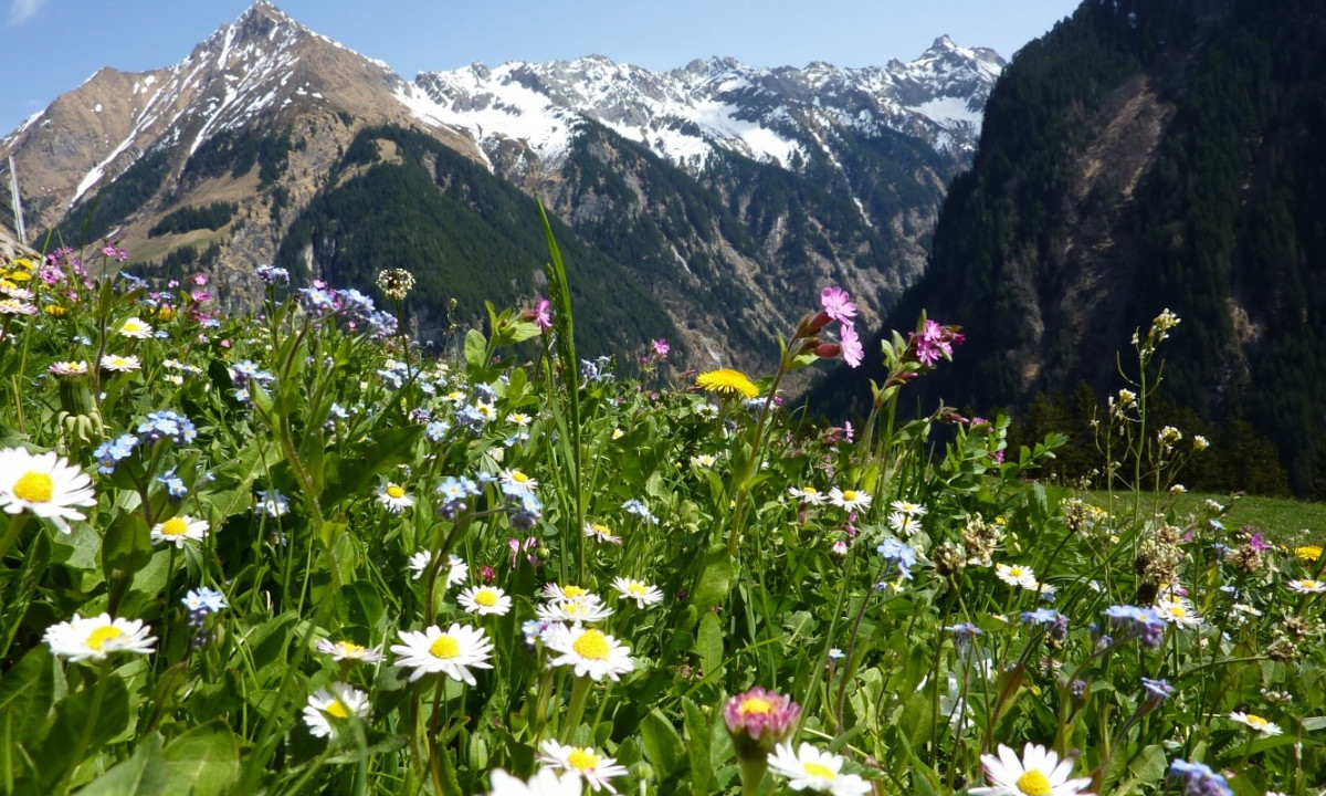 Bjergene omkring Camping Schluga