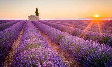 Et besøg til Provence