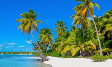 Caymanøerne - Palmer på stranden
