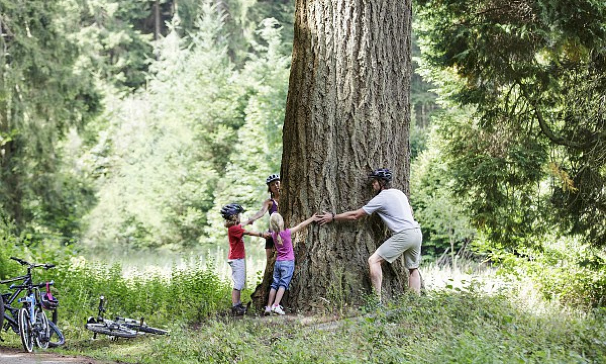 Bostalsee - Familie omkring træerne i skoven