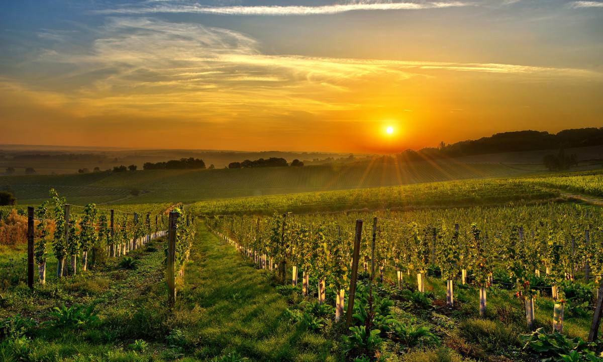 vinmarker i området