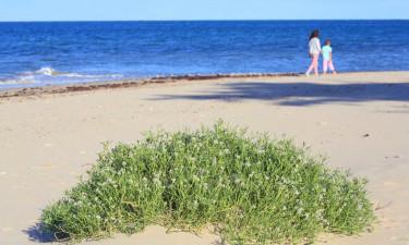 Lækker strand