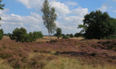 Camping Drouwenerzand in Drenthe