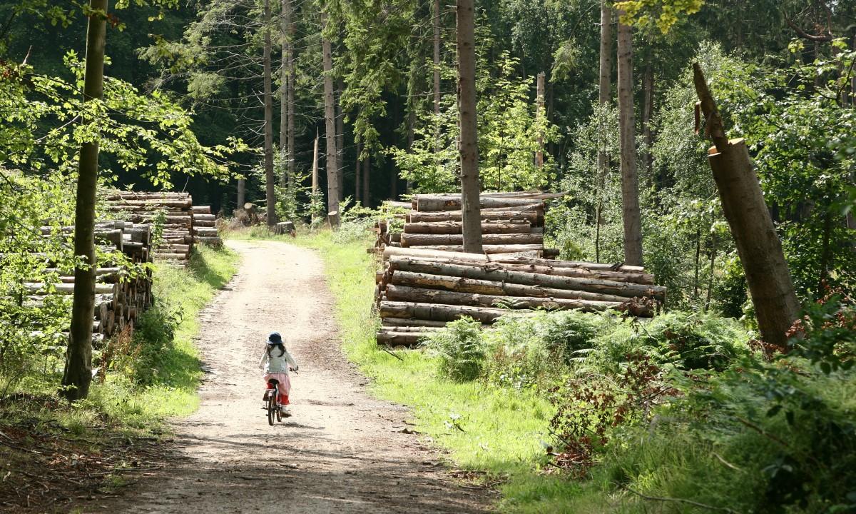 Cykeltur paa grussti i skoven