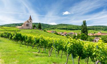 Natur i Alsace