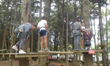 Aktivitet i skoven